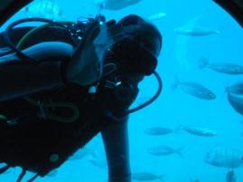 Un plongeur qui nourrit les poissons !
