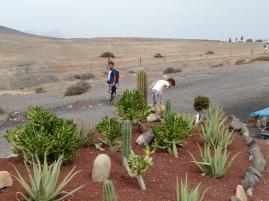 Cactus de Papagayo.