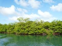 La mangrove du marin.