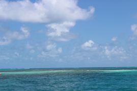 Une barrière de corail.