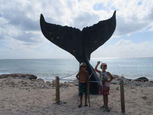 Encore une baleine !