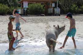 Le sud avec les cochons !