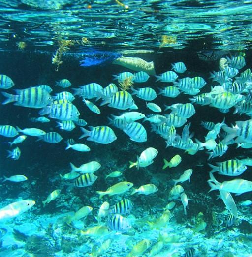 2-20-2005 Grotto fish 4