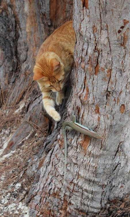 Qui s'est fait manger par ce chat :-(