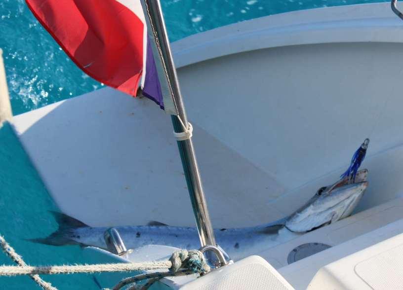 C'est un Barracuda... on va le rejeter à la mer :-(