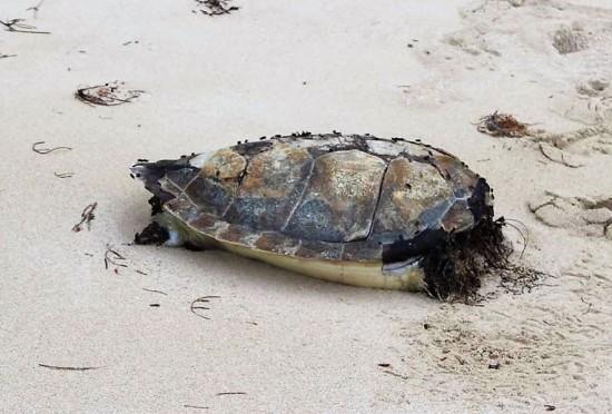 Un triste découverte sur la plage :-(