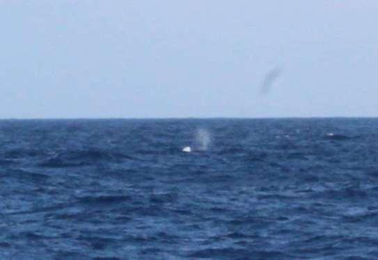 Notre première baleine ;-)