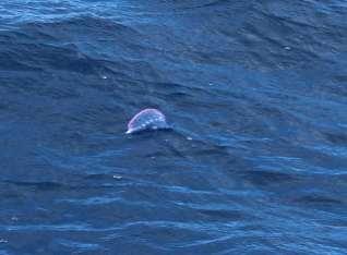 Une autre méduse