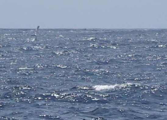 Notre deuxième baleine.